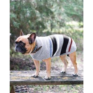 """Dog""""s sweater Sam"""